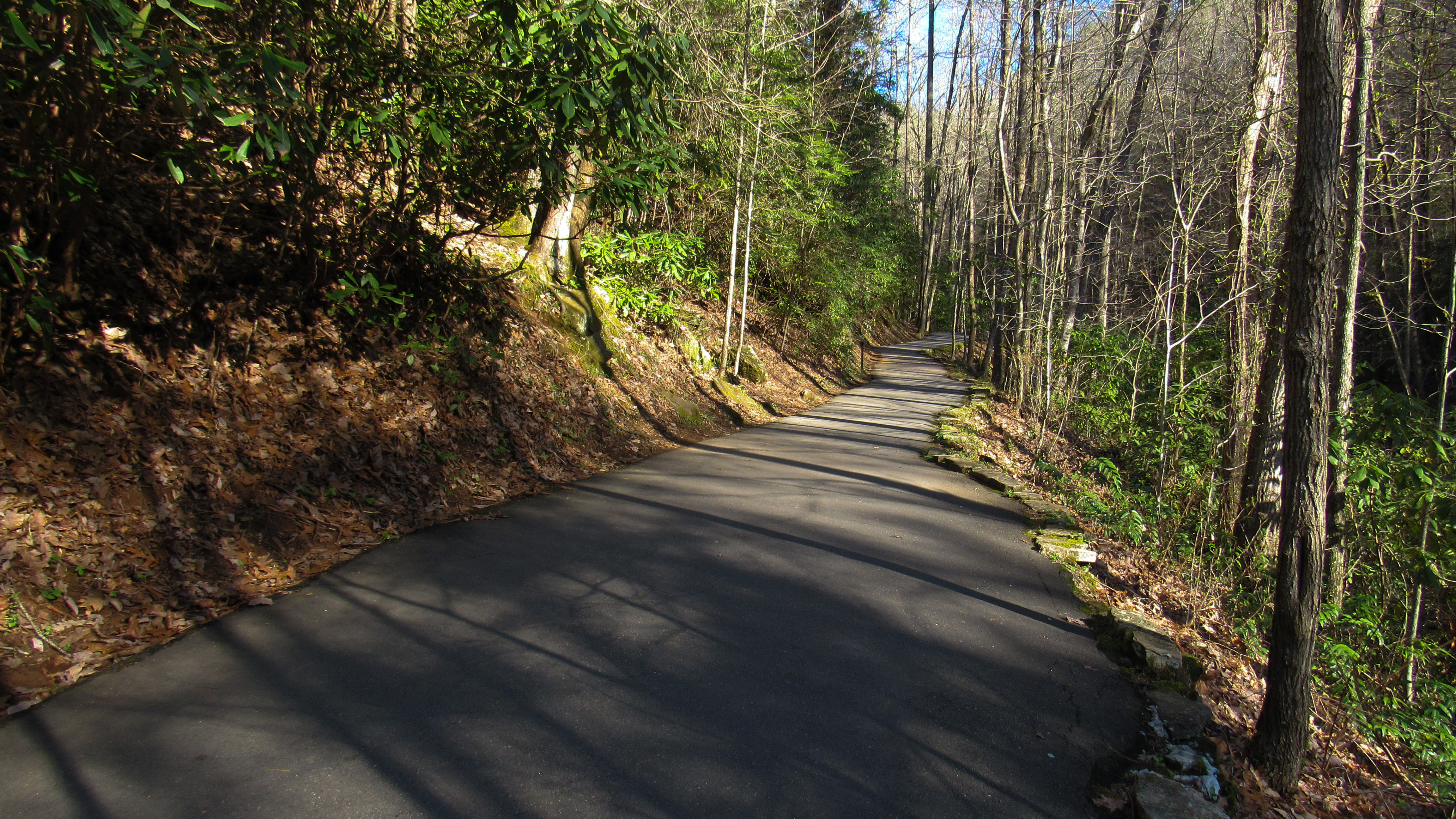 Anna Ruby Falls sees so much foot traffic that it's environmentally better to just pave the path.